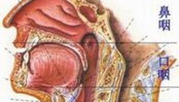咽或打呵欠),空气通过咽鼓管咽口进入鼓室,以维持鼓膜两侧的气压平衡.图片