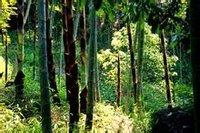 董寨国家级自然保护区自然景观