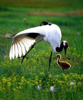 属于中国国家一级保护动物