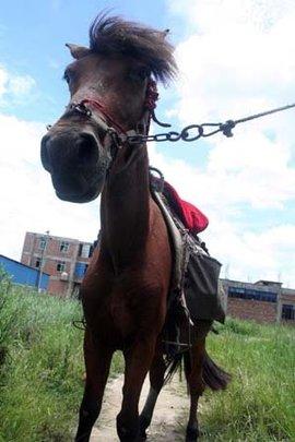 马的蹄子结构图片