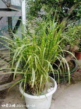 被子植物结构层次意图