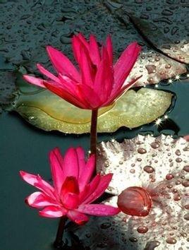 海绵纸做花球步骤图解