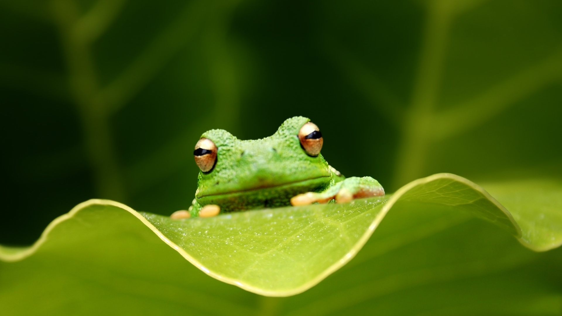 青蛙是几级保护动物