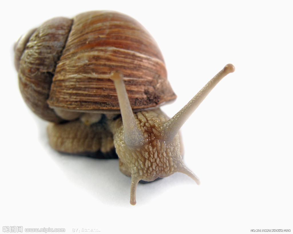 蜗牛有壳,形状像小螺,颜色多样化;头有四个触角