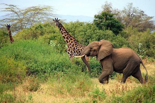 德贾动物保护区是非洲最大的和最好的雨林之一,几乎完全被其自然边界