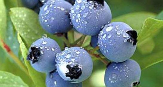 蓝莓吉他谱贝加尔湖畔