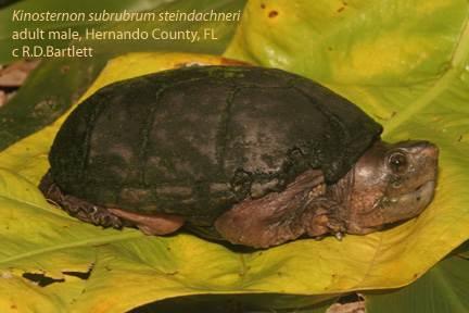 来自本科动物分布带北缘的一些种类