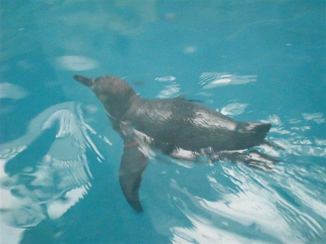 武汉动物园企鹅