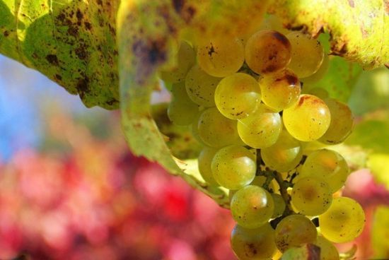 欧洲最大的葡萄酒厂商卡思黛乐总裁阿兰卡思黛乐在2014年亚太区国际葡萄酒及烈酒展览会上对《第一财经日报》记者表示,三公消费受限确实影响了大宗团购消费,我们现在非常关注个人消费中的年轻消费者,他们将是未来个人消费的主力军。 消费群变化意味着喜好产品随之改变,但葡萄酒界的增长新力军仍处于酝酿期。葡萄酒营销专家王德惠接受《第一财经日报》记者采访时表示,目前年轻消费人群的主流消费产品属性仍处于摸索期。但《第一财经日报》记者注意到,从海关数据看,葡萄汽酒已经逆市成为进口葡萄酒增长的唯一细分品类。 名庄酒