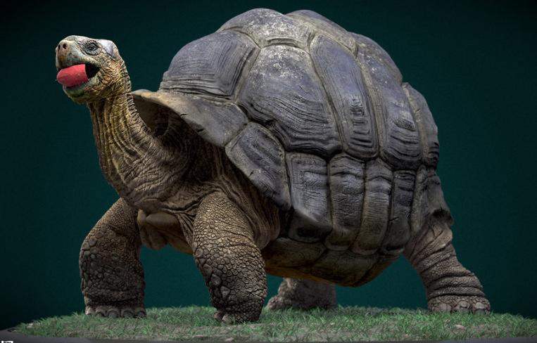 乌龟角状颚身体结构图