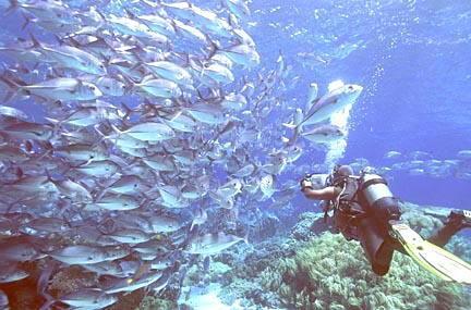 壁纸 海底 海底世界 海洋馆 水族馆 桌面 432_285