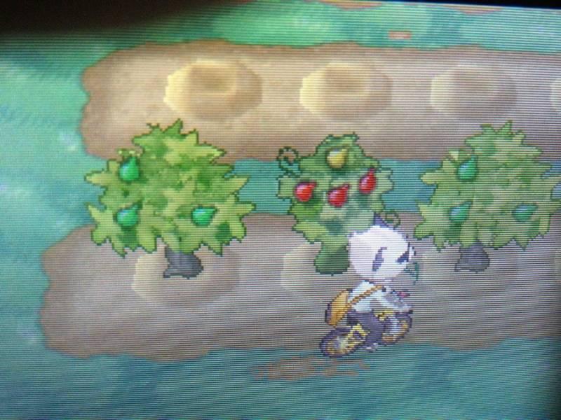 口袋妖怪树果