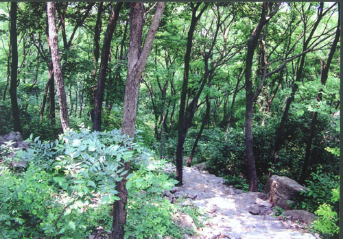 上窑国家森林公园