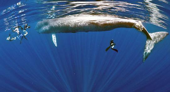 壁纸 动物 海洋动物 桌面 542_295