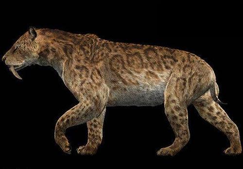 剑齿虎曾生活在亚洲,非洲