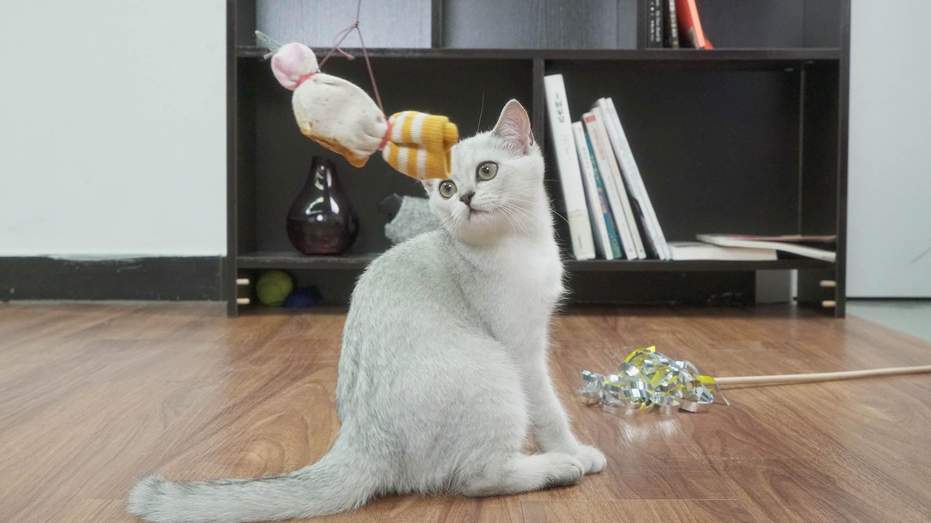 自制创意逗猫棒【举起爪儿来】